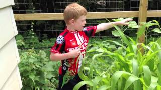 Ask Axel - Vegetable Gardening Advice - Diy - Kid Vid