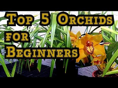 Orchid Care Top 5 Orchids For Beginners And Tips To