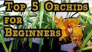 "ORCHID CARE :  TOP 5 Orchids for Beginners and Tips to BLOOM Them. ""how to care for orchids"""