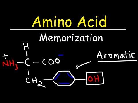 Memorize The 20 Amino Acids - The Easy Way!