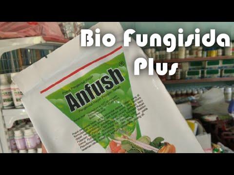biofungisida-anfush,-kombinasi-trichoderma-dan-gliocladium