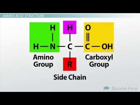1 How Amino Acids Form Protein - YouTube