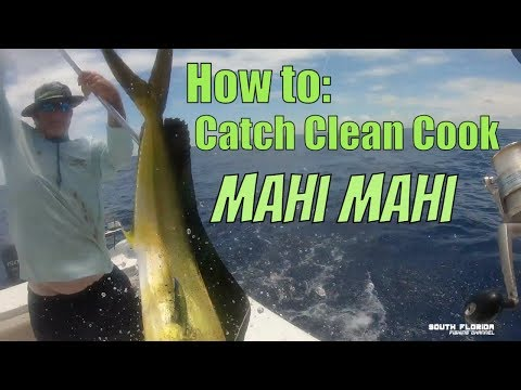 How To Catch Cook And Clean Mahi | The InFamous Florida Mahi Sandwich