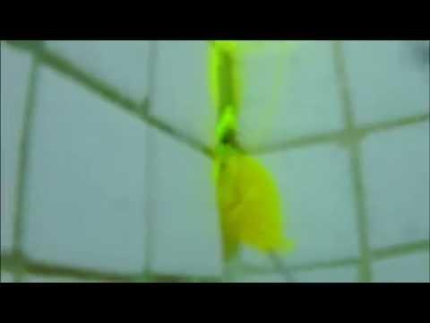 piscine carrele qui fuit recherche de fuite forman 31 - Colorant Fuite Piscine