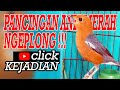 Pancingan Anis Merah Berkicau Awas Kejadiannnn Bos Red Bird Geokichla Indonesia  Mp3 - Mp4 Download