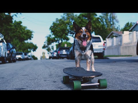 CHON - Waterslide (Official Music Video)