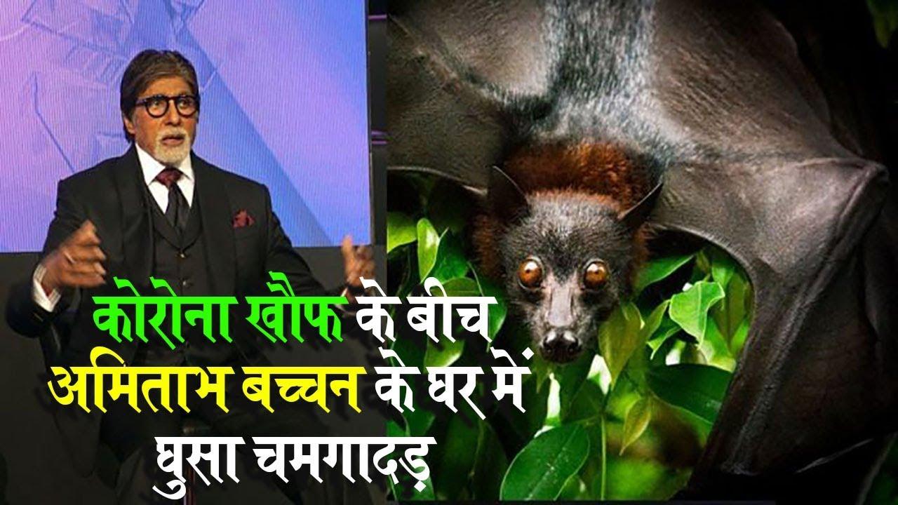 कोरोना खौफ के बीच अमिताभ बच्चन के घर में घुसा चमगादड़ | Amitabh bachchan Viral Post | Mobile news24