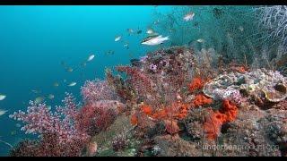 4K Underwater Indonesia: Marine Biodiversity (UltraHD Nature & Wildlife Stock Footage Demo Reel)