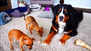 3 dogs stay still