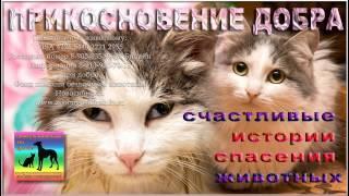 """Спасли умирающего котенка в приюте Дари добро rescue animals at the shelter """"Dari dobro"""" Novosibirsk"""