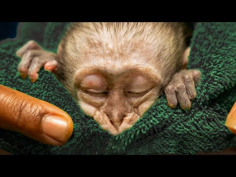 Baby Monkey SAVED | Malawi Wildlife Rescue Compilation | Love Nature