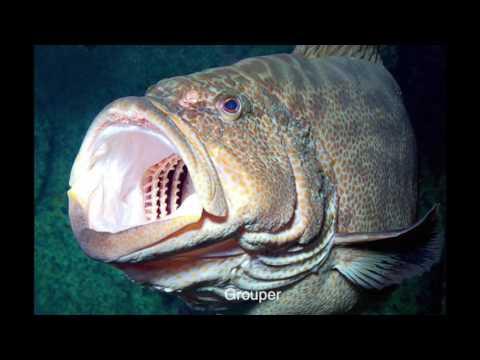 Bony Fish Project