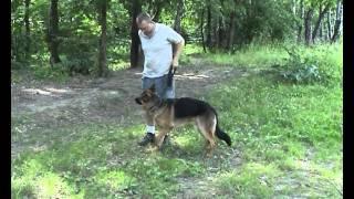 Дрессировка собак  ОКД собак  базовые упражнения 1