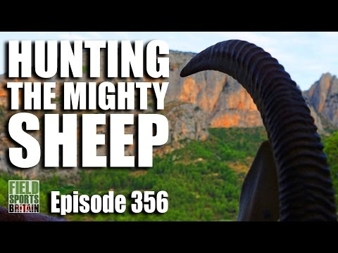 Fieldsports Britain - Hunting the Mighty Sheep