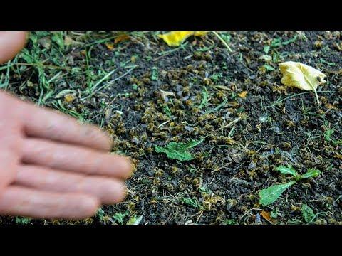 Массовая гибель пчел в Добринском районе. В чем причина?