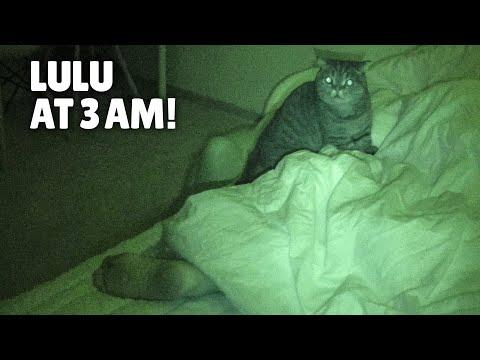 What Do My Cats Do When I'm Asleep? | Kittisaurus