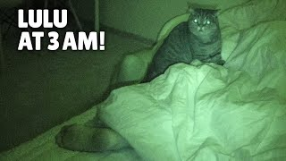 What Do My Cats Do When I'm Asleep? | Kittisaurus