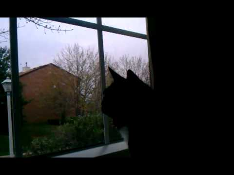 Stupid cat broke his meow.
