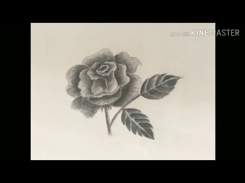 drawing-class-12,-rose-pencil-shading,-rose-drawing,-drawing-class-for-kids-and-all-ages