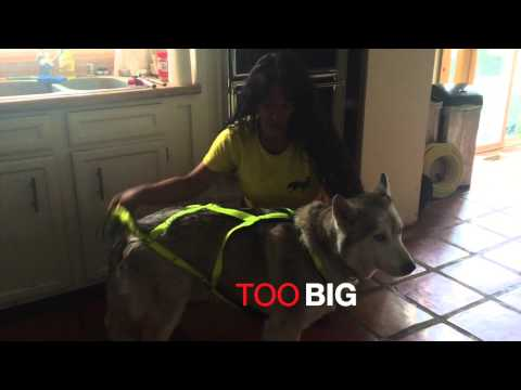 Mushing Harness Fitting: X BACK And SHOULDER From CTC Dog Gear