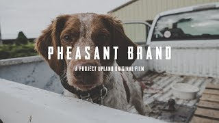 Pheasant Hunting with American Brittany's  Pheasant Brand  Dogtra ECollars