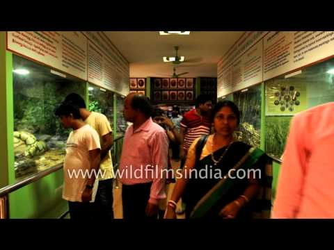Visitors take a look at snakes kept in glass boxes - Chennai