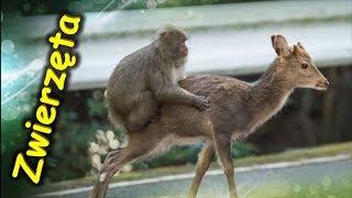 Najśmieszniejsze zwierzęta świata. To fajne.