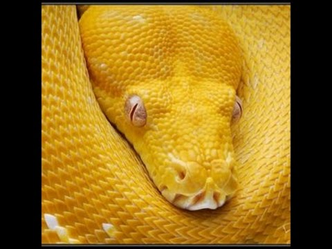 Chinese Astrology: Earth Snake