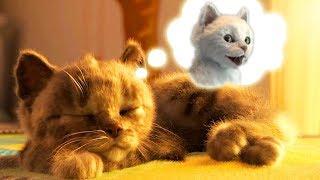 Little Kitten My Favorite Cat Care - Little Kitten Preschool - Fun Educational Learning For Children