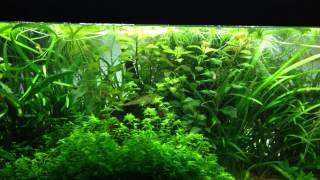 importance of water flow in planted tank