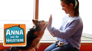 Schulhund | Information für Kinder | Anna und die Haustiere | Spezial
