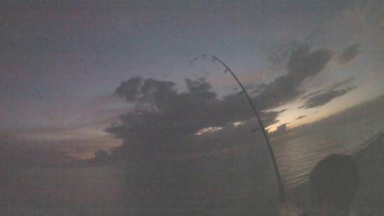 Monster lemon shark on spinning reel youtube for Lake pontchartrain fish species