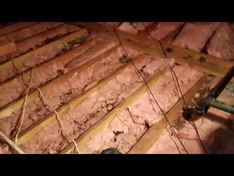 Raccoon Contamination and Cleanup Attic Insulation NJ 732 698 8387