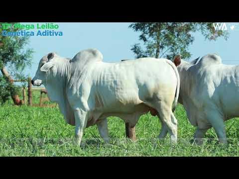 LOTE 73 - DUPLO - REM 10218, REMC A 1939 - 17º Mega Leilão Genética Aditiva 2020