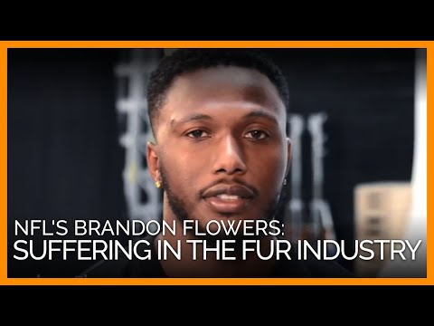 NFL Player Brandon Flowers: Animals Suffer in the Fur Industry