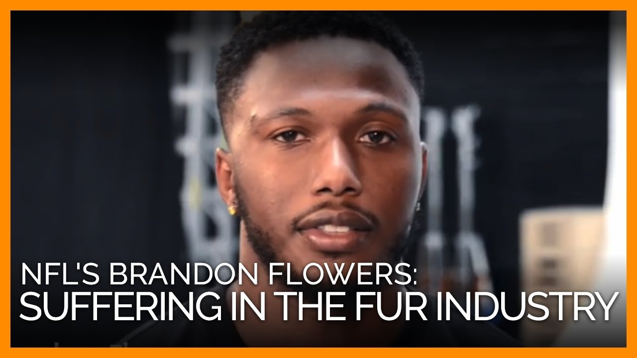 NFL Player Brandon Flowers Animals Suffer in the Fur Industry