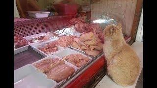 Каждый день рыжий кот выпрашивал мясо и куда-то уносил. И вот продавщица узнала кому