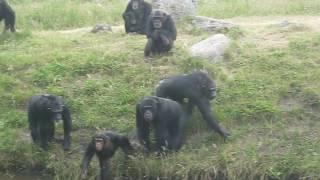 Serengeti Park. Прикольные обезьяны. Общаются с нами // Germany. Serengeti Park. funny monkeys