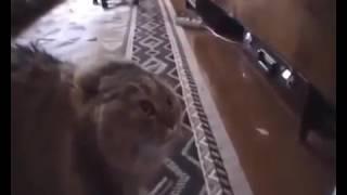 Вызов ветеринара Москва(, 2017-01-19T12:19:27.000Z)
