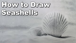 how to draw seashells time lapse drawing tutorial
