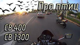 О перелетах птиц  Покатушка на CB 400 с CB 1300