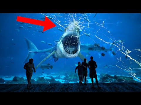 Why NO Aquarium In The World Can Hold A Great White Shark