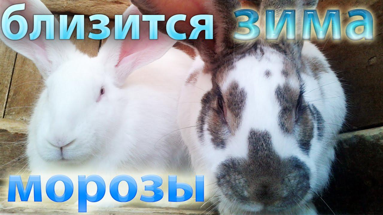 кролики в клетках на улице
