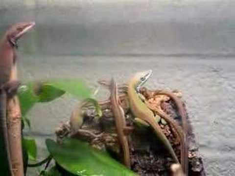 The Community reptile tank