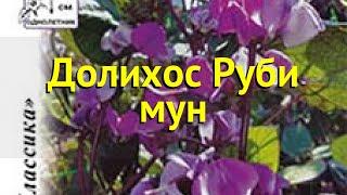 Долихос. Краткий обзор, описание характеристик, где купить семена Долихос Руби мун