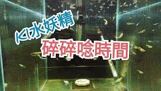 輕鬆養孔雀魚 日常 水族  K1 藍寶鸚鵡 雙劍 矛尾 海水缸養水
