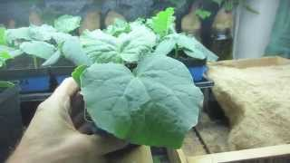 How To Grow Vegetable Seedling and Germinate Seeds Indoors With Amazing Results!