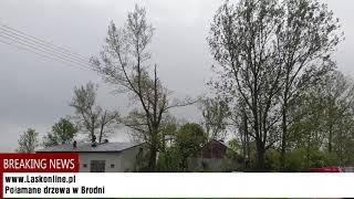 Połamane drzewa w Czestkowie F