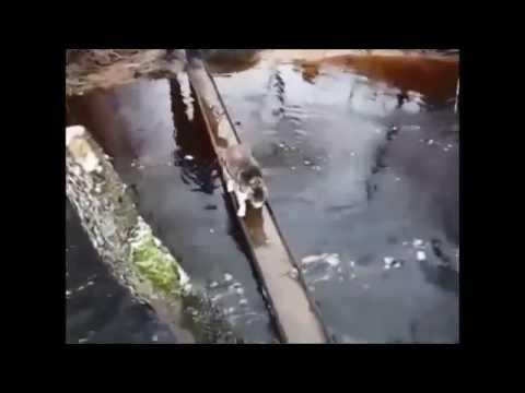 วิธีข้ามสะพานน้ำขัง ไม่ให้เท้าเปียก