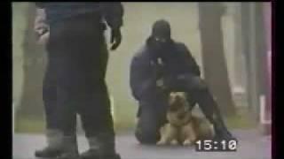 Belgischer Malinois, Schutzhund - Polizeihund
